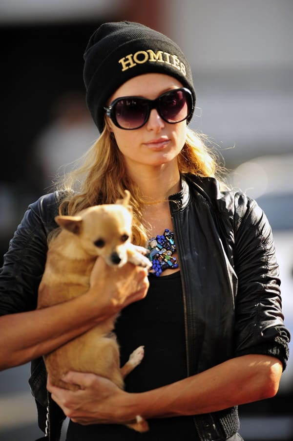 Paris Hilton is always accompanied by her Chihuahua pet pooch Peter Pan